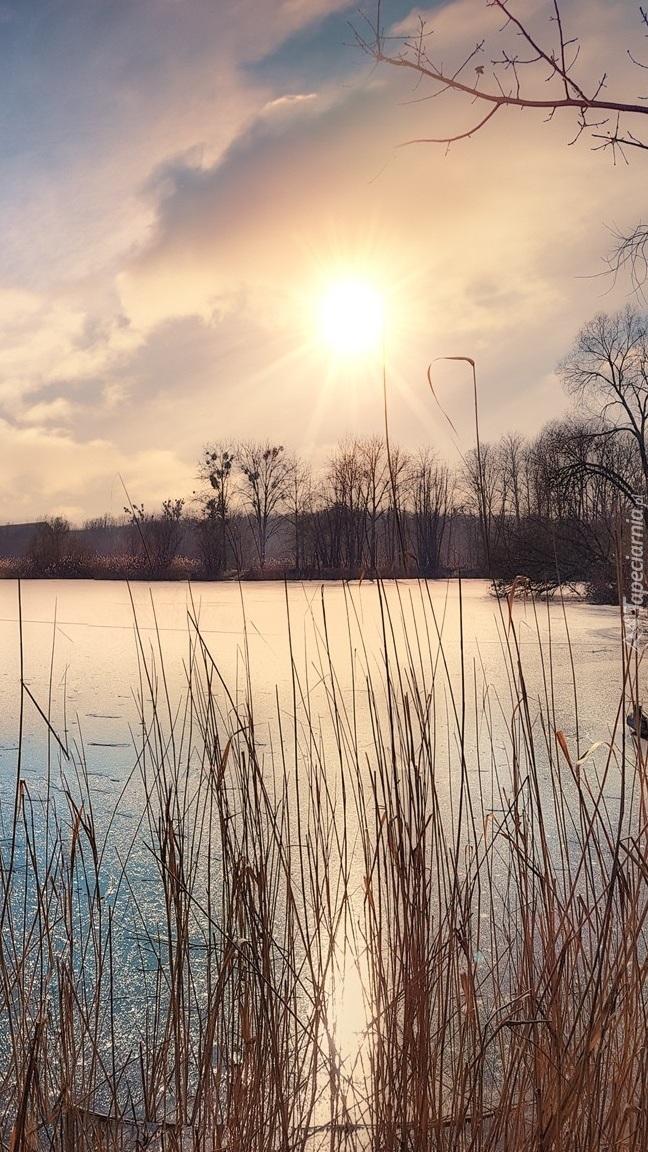 Trzciny nad jeziorem
