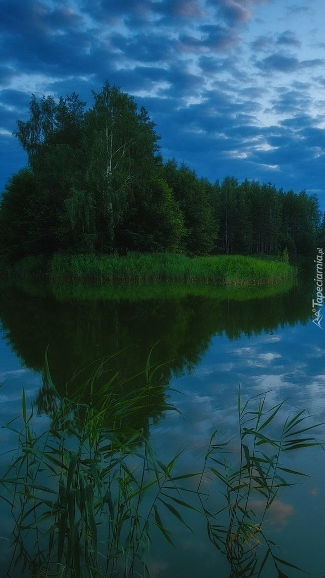 Trzciny w jeziorze