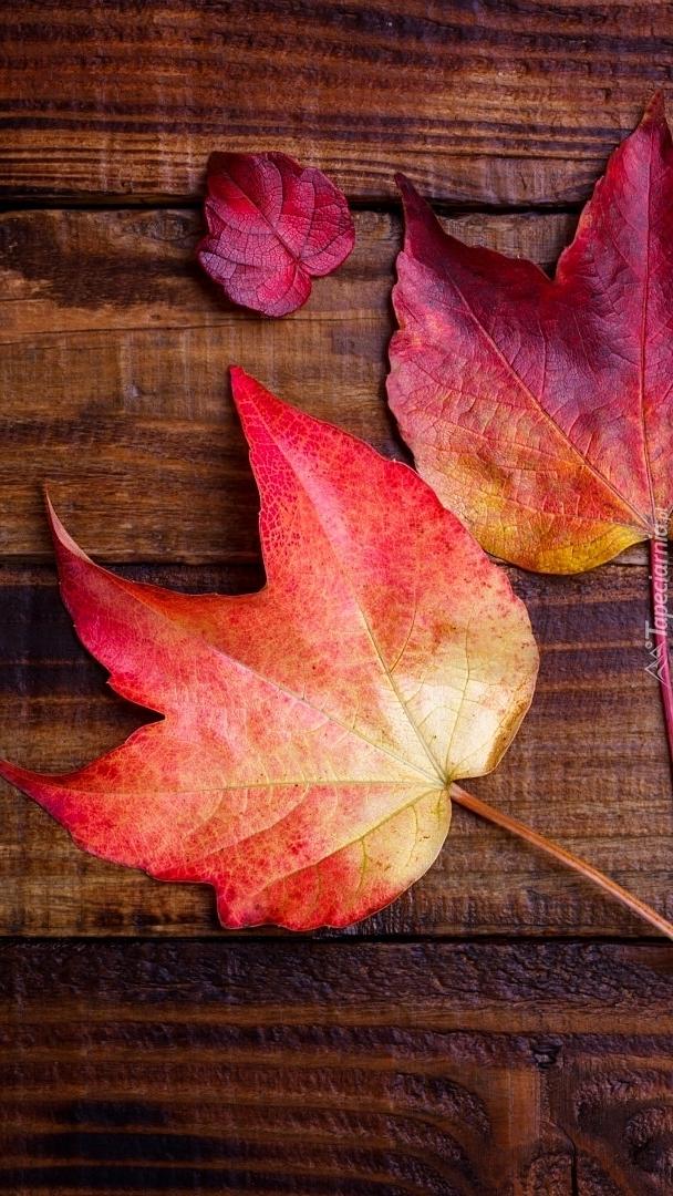 Trzy czerwone liście klonu