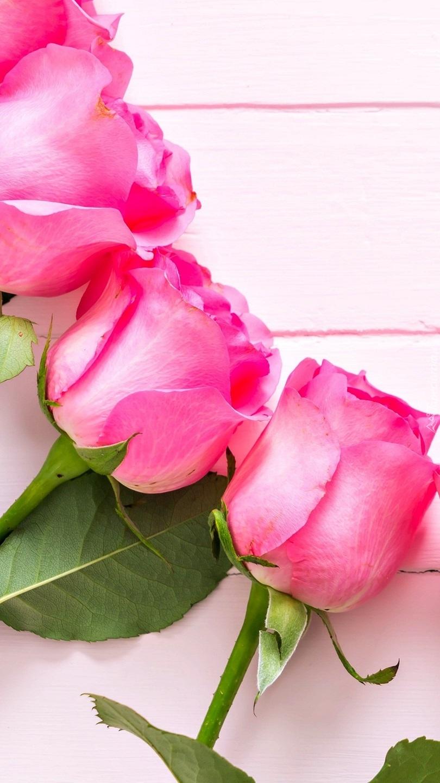 Trzy pąki róż