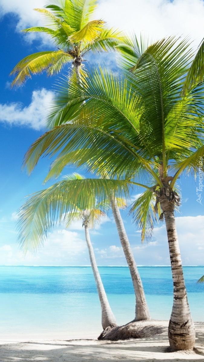 Trzy palmy nad morzem