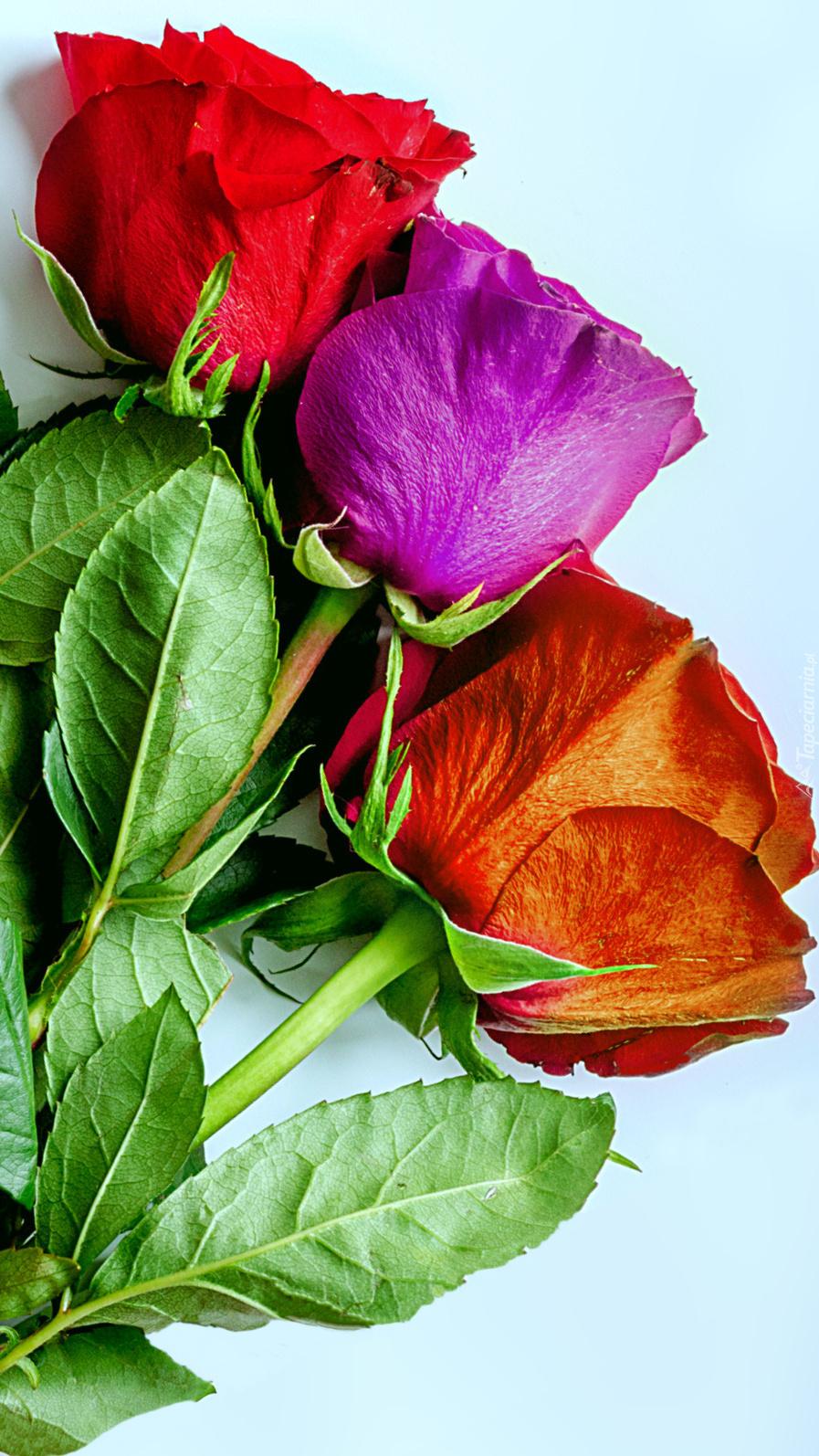 Trzy róże