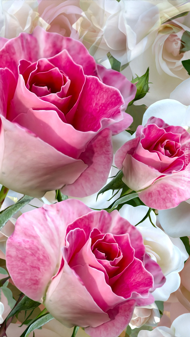 Trzy róże w grafice
