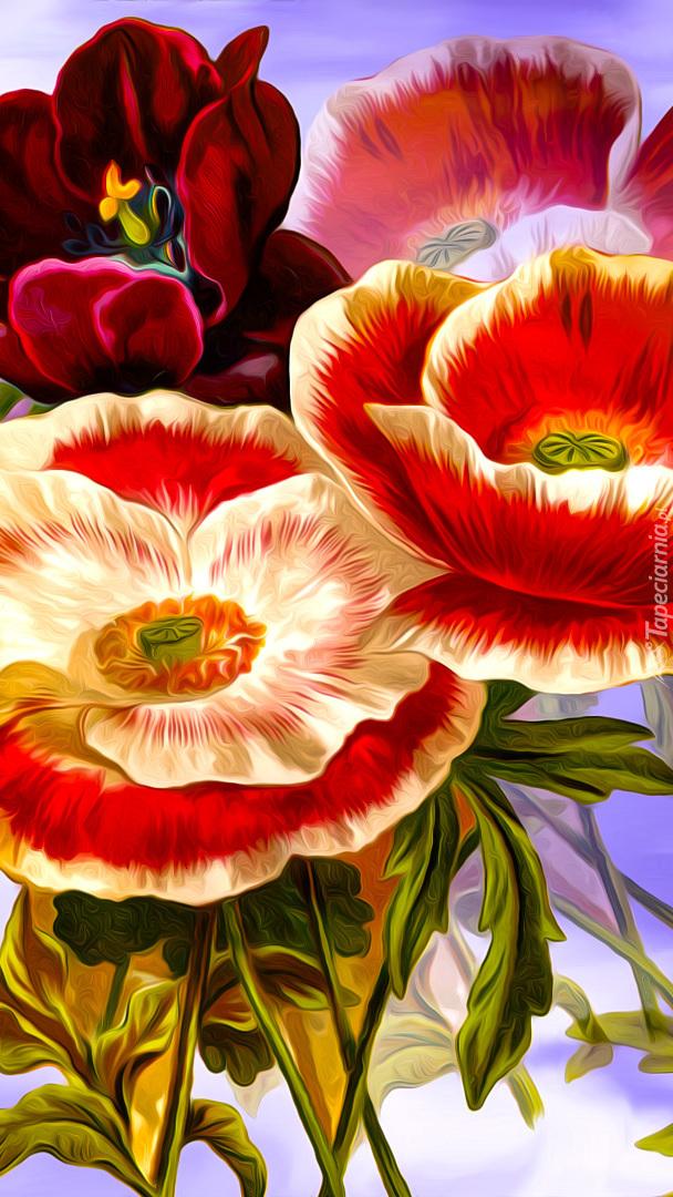 Tulipan i maki