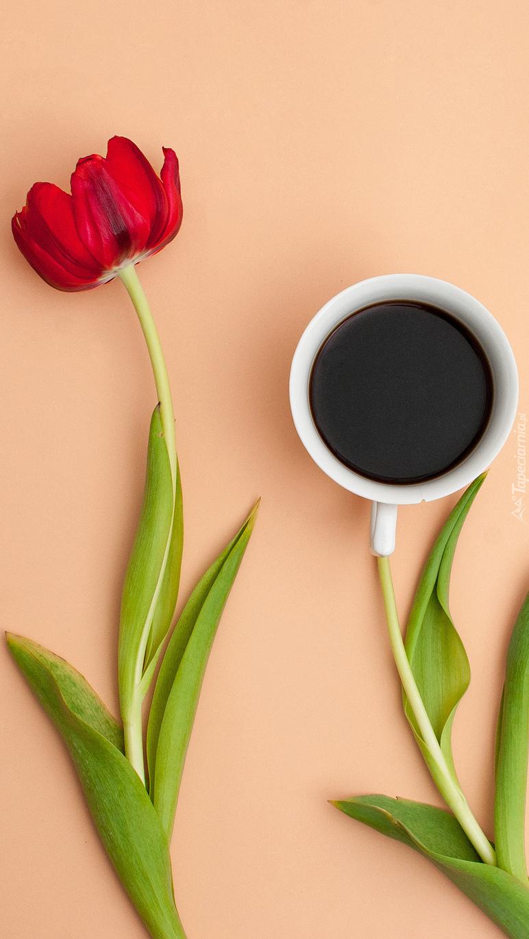 Tulipan obok kawy