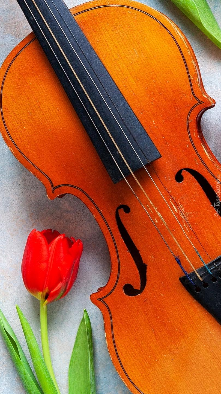 Tulipan obok skrzypiec