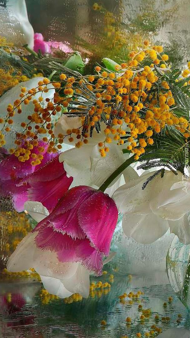 Tulipany i akacja srebrzysta
