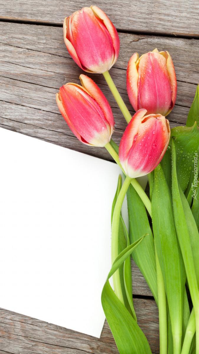 Tulipany i biała kartka