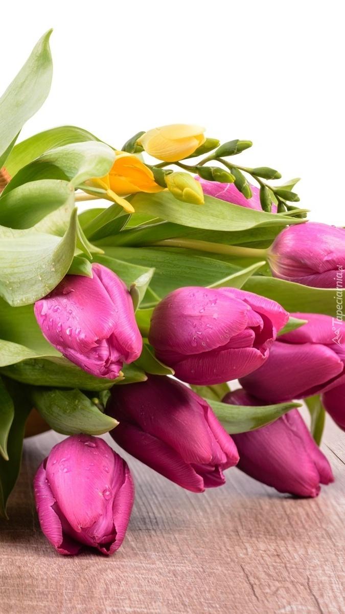 Tulipany i frezje