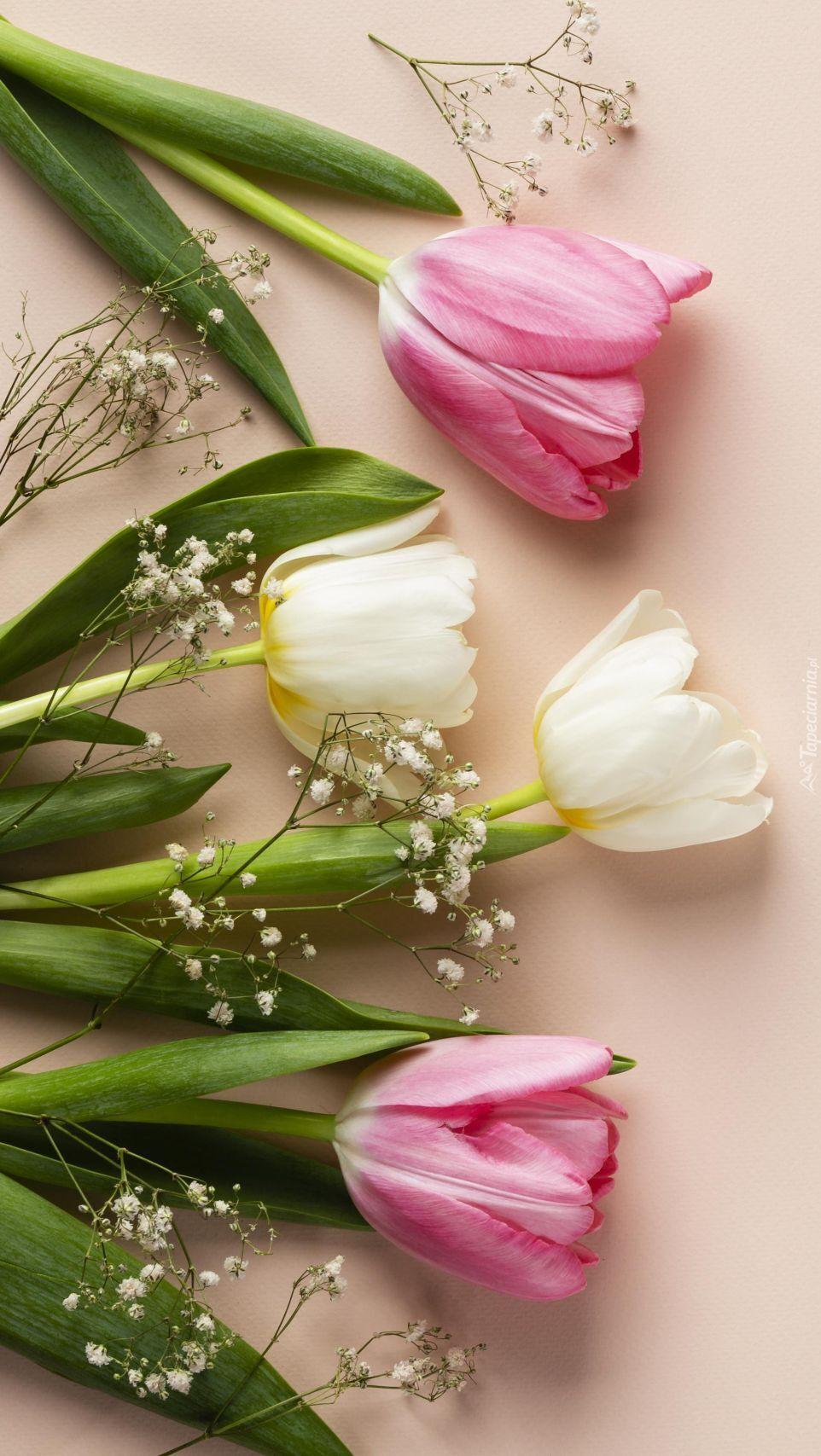 Tulipany i gipsówka na jasnym tle
