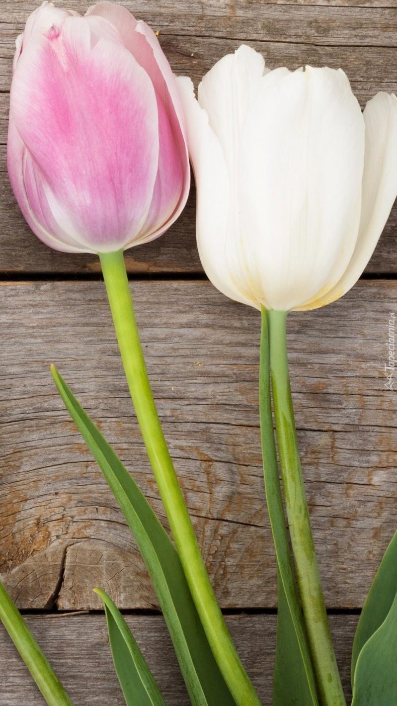 Tulipany na deskach