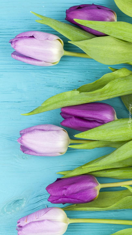 Tulipany na niebieskich deskach