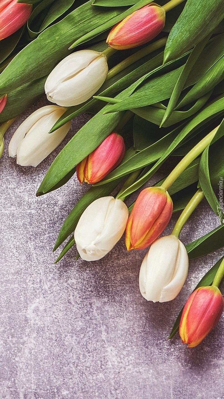 Tulipany na szarym tle