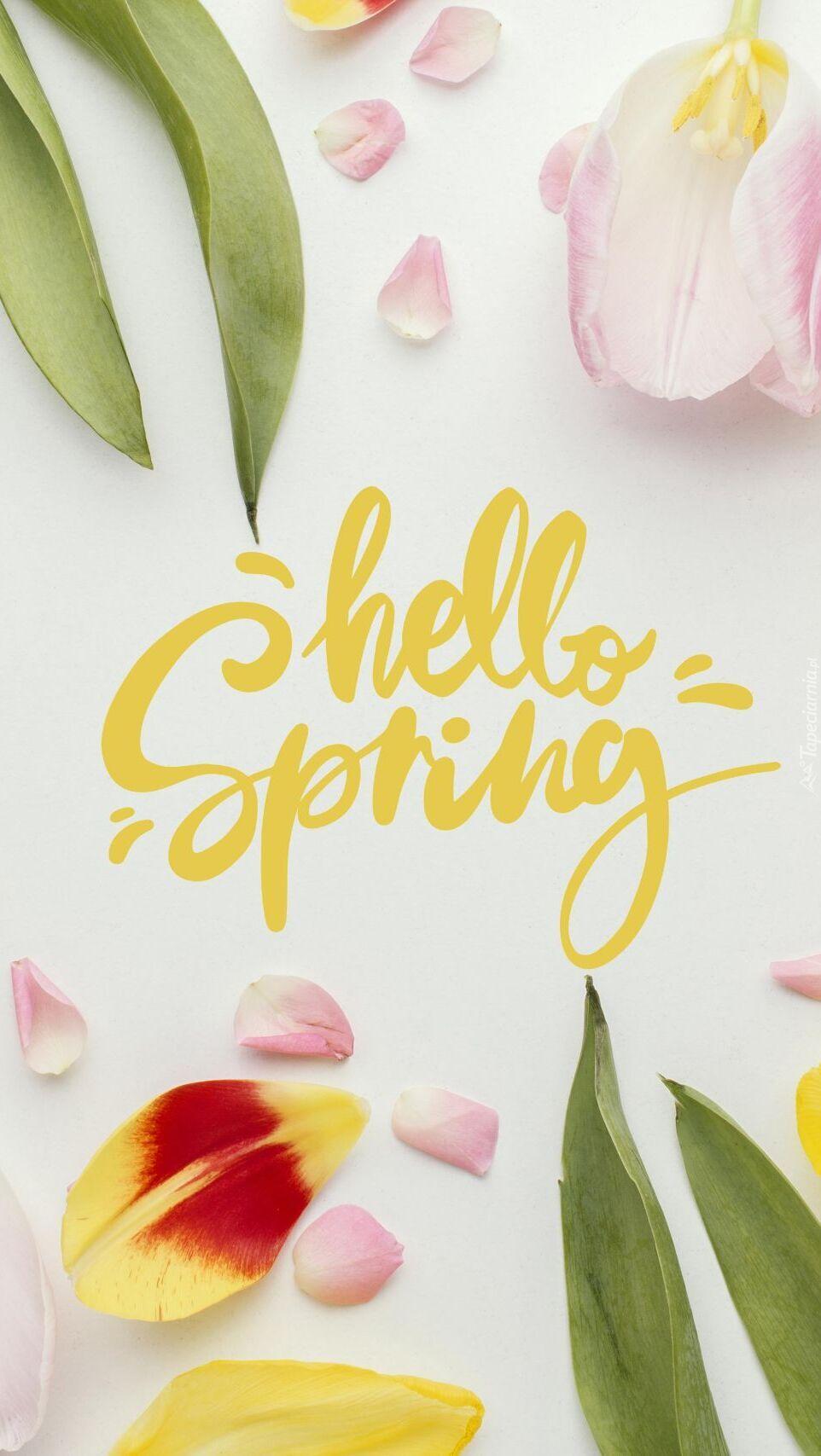 Tulipany przy napisie hello spring