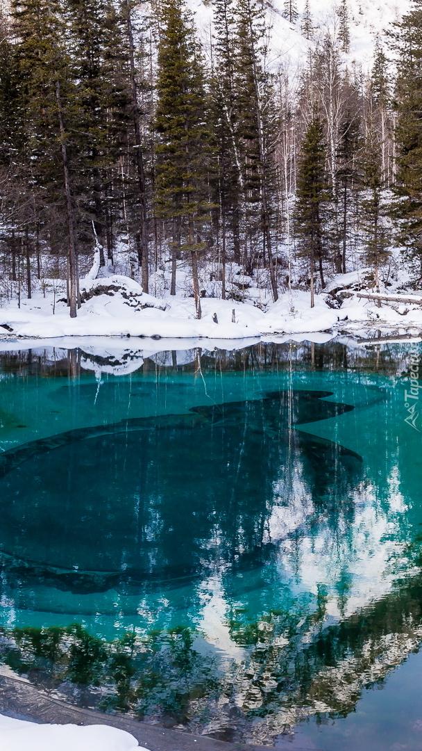 Turkusowe jezioro w zimowym lesie