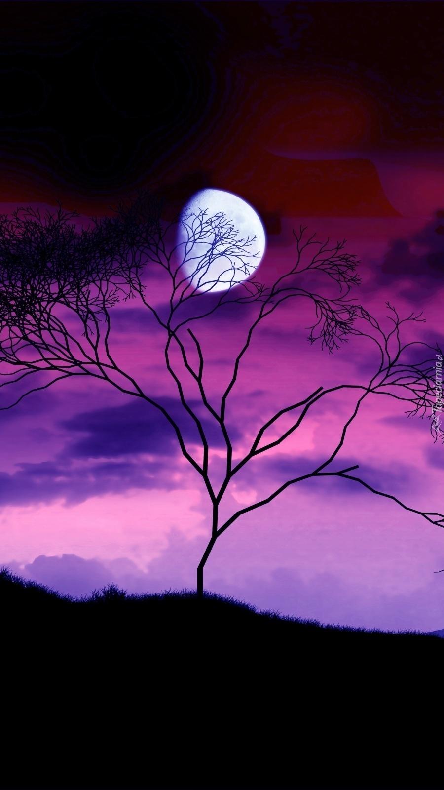 Uschnięte drzewo w świetle księżyca