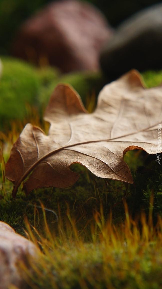 Uschnięty liść na kamieniu w trawie