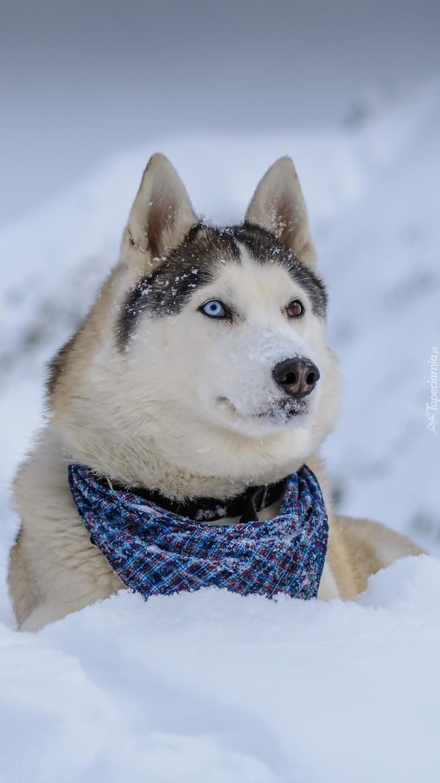 Uwielbiam zimę