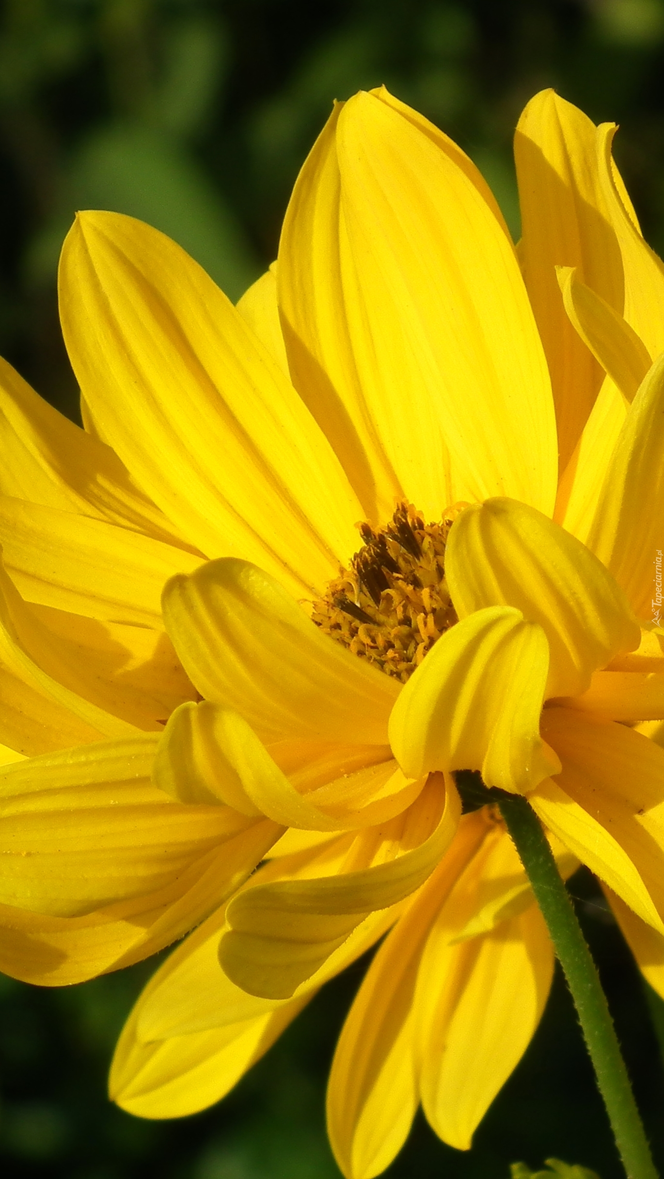W słonecznym kolorze
