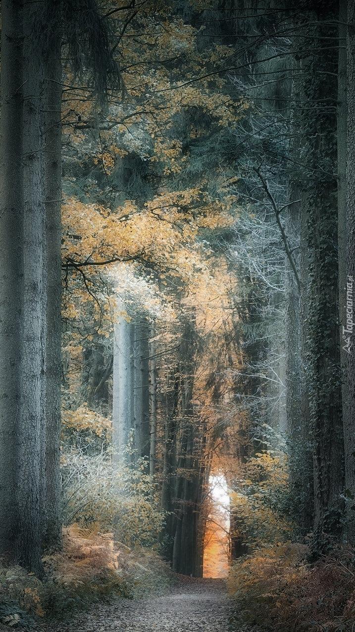 Wąska ścieżka w lesie
