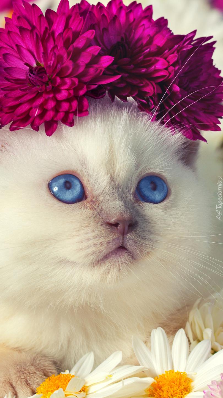 Wianek z kwiatów na głowie kotka