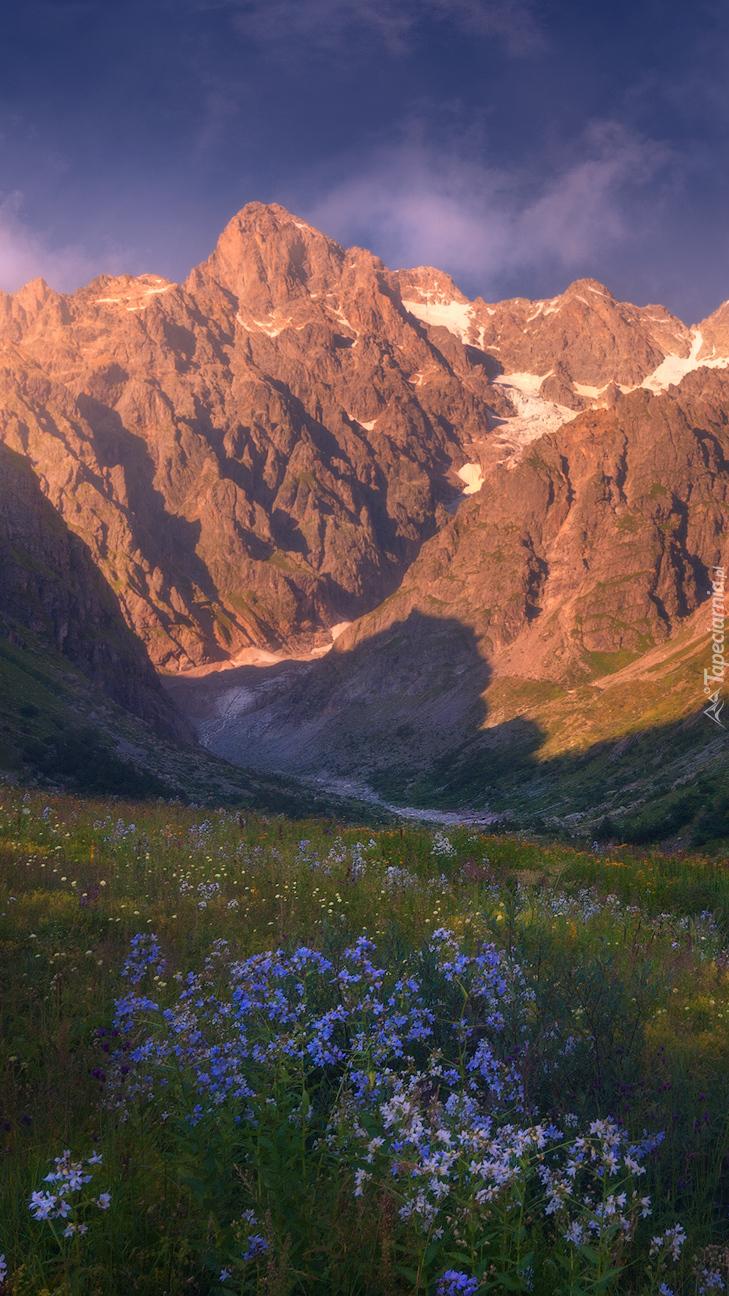 Widok na góry z kwiatowej łąki