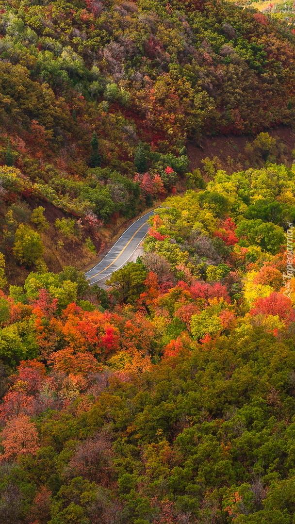 Widok na jesienny las z lotu ptaka