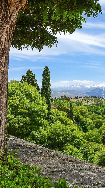 Widok na zielone drzewa