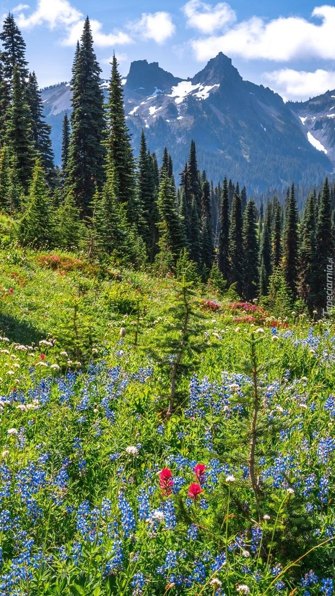 Widok z łąki na drzewa i góry
