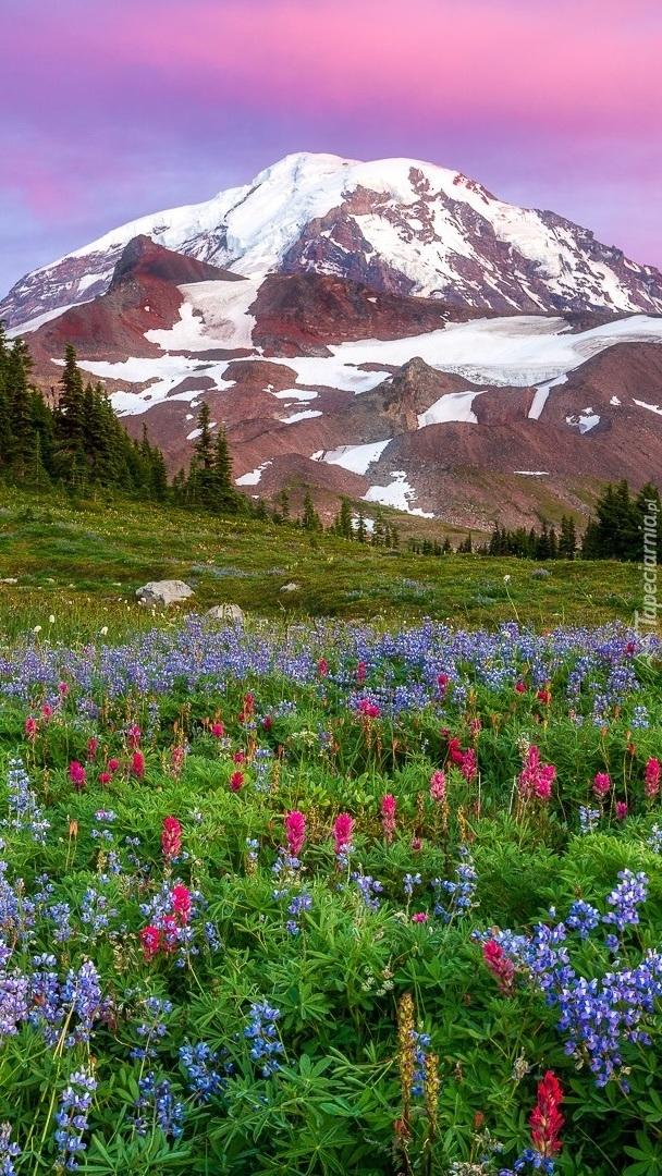 Widok z łąki na stratowulkan Mount Rainier