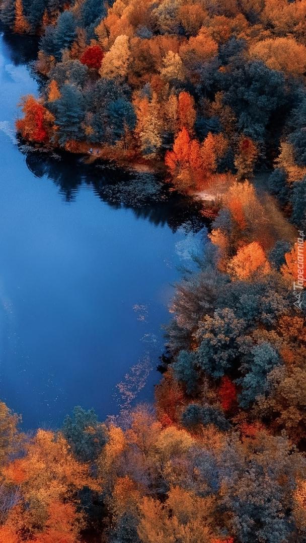Widok z lotu ptaka na jesienne lasy nad rzeką