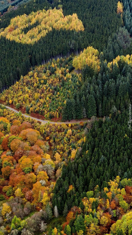 Widok z lotu ptaka na jesienny las