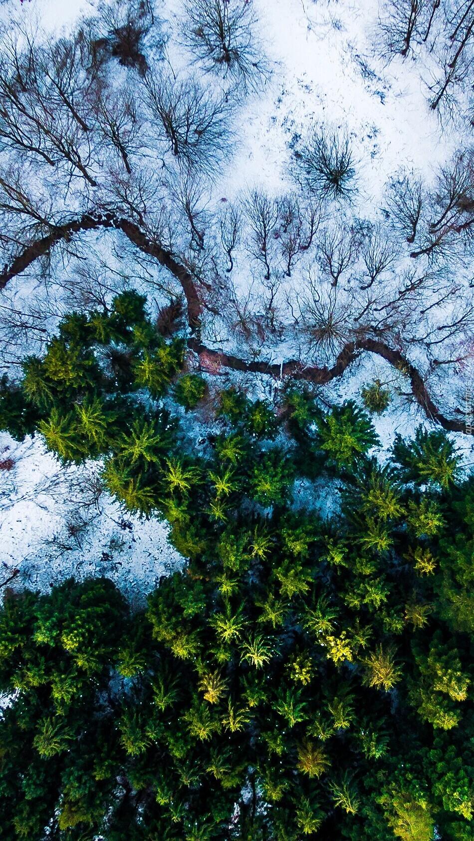 Widok z lotu ptaka na las i rzekę