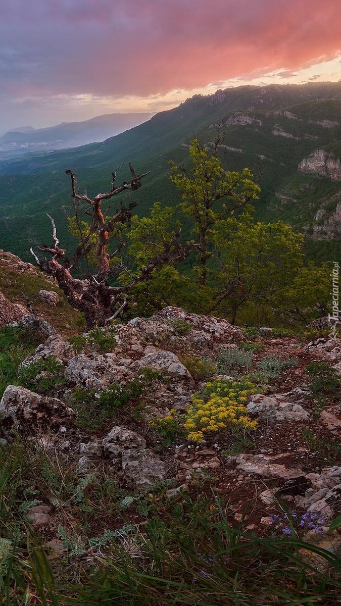 Widok ze skał na góry