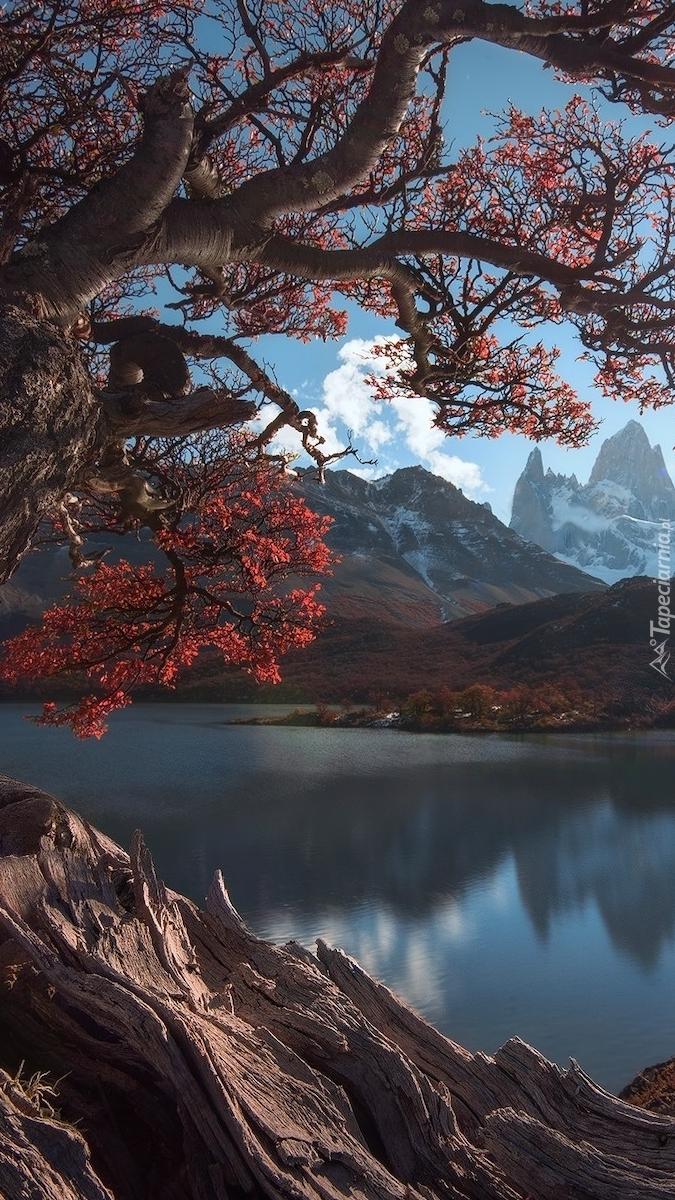 Widok zza drzewa na jezioro i Andy