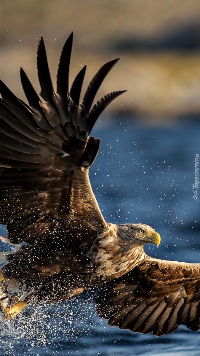 Wielkie skrzydła