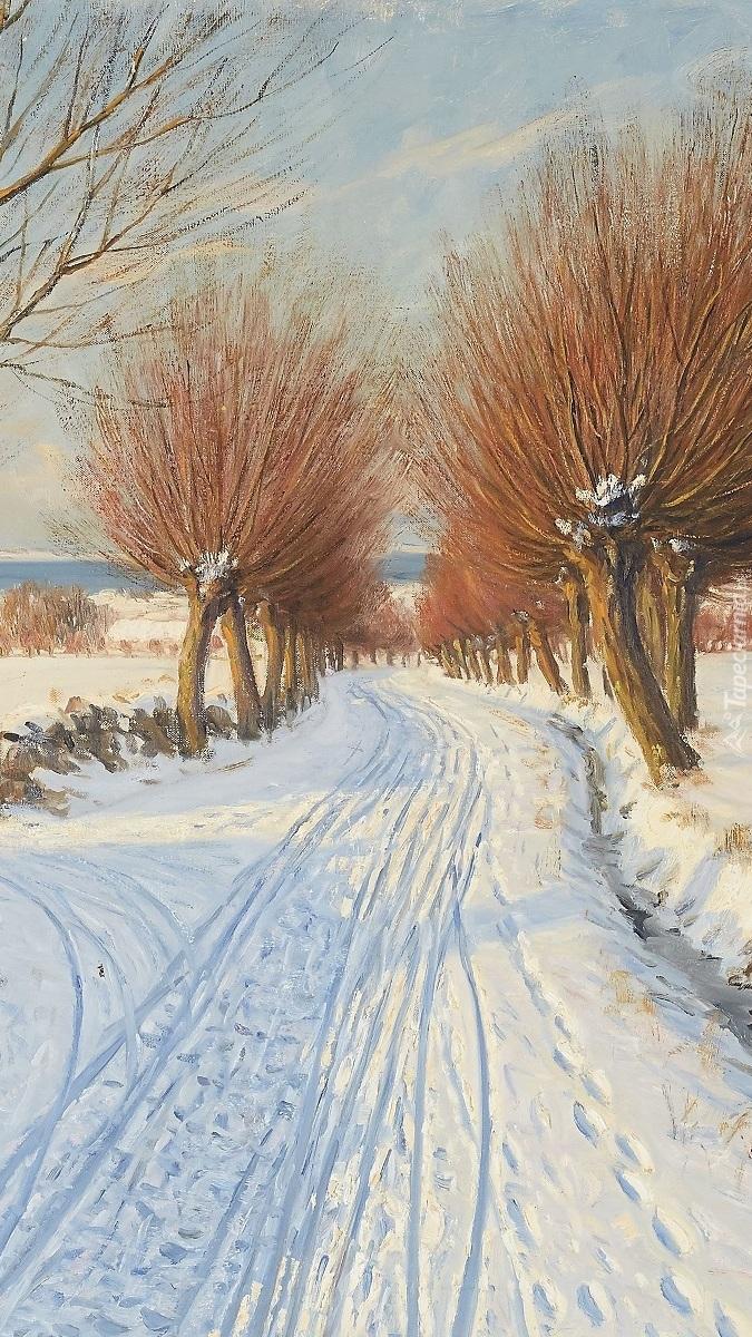 Wierzby przy zaśnieżonej drodze