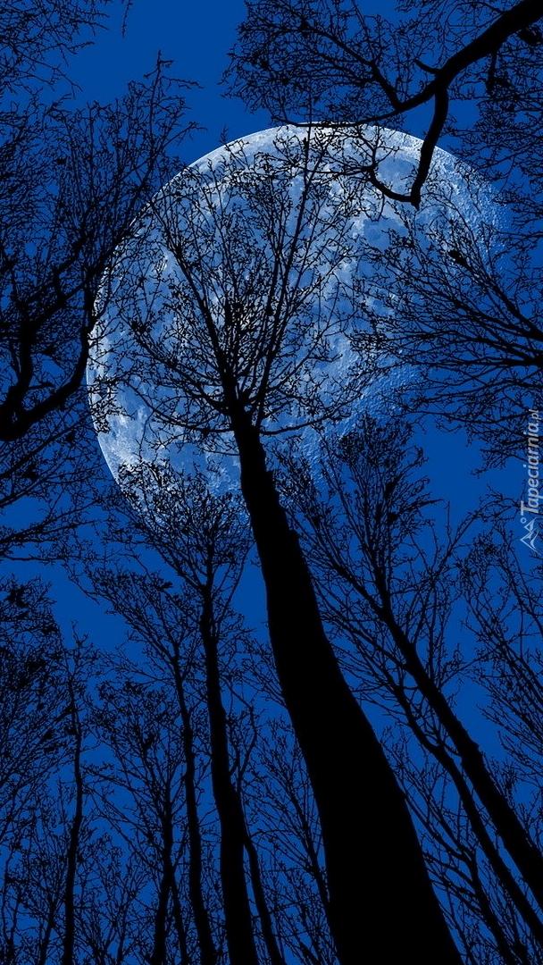 Wierzchołki drzew na tle księżyca