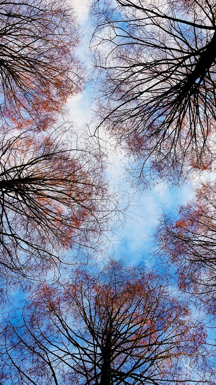 Wierzchołki drzew na tle nieba