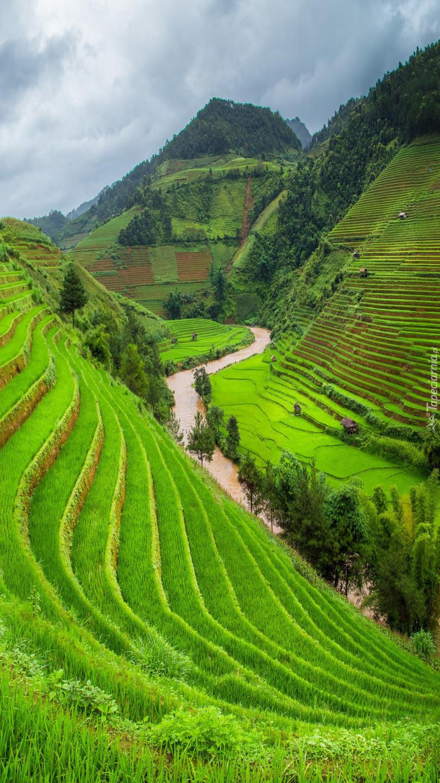 Wietnamskie tarasy ryżowe