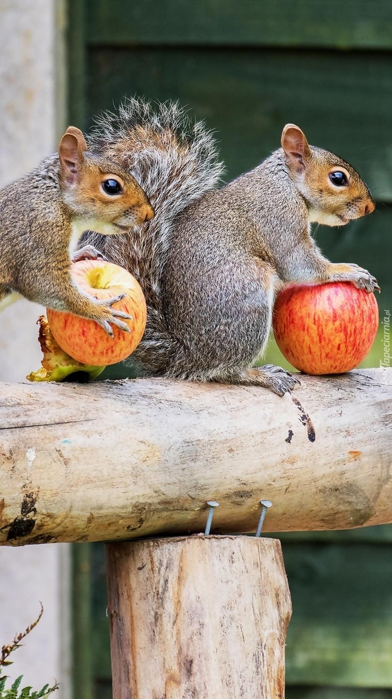 Wiewiórki z jabłkami na belce