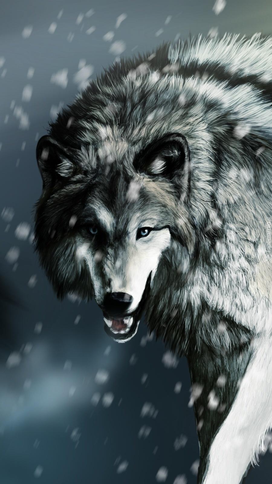 Wilk szczerzący kły