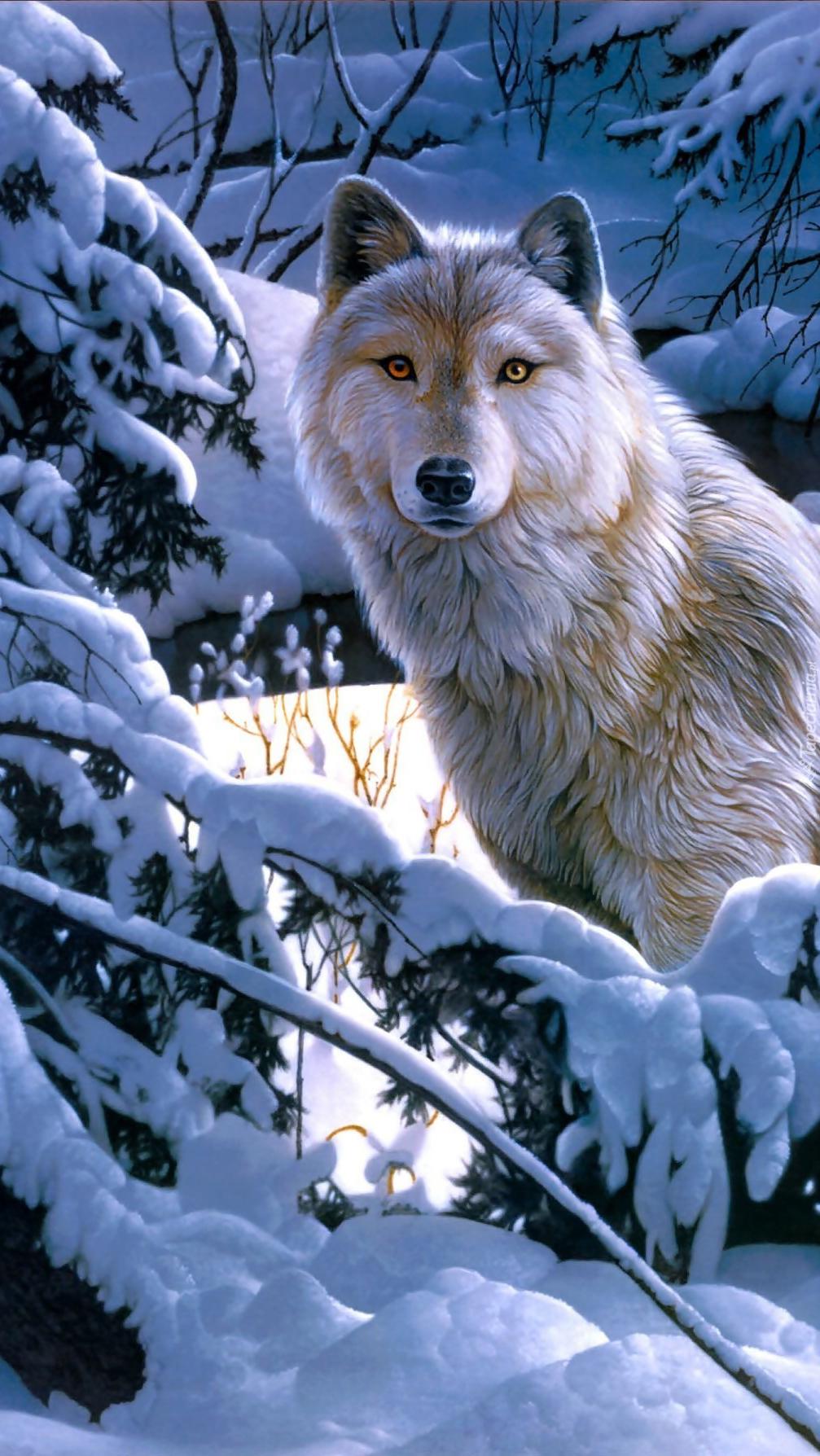 Wilk w zimowym ośnieżonym lesie