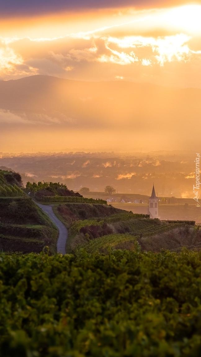 Winnice na wzgórzach Kaiserstuhl