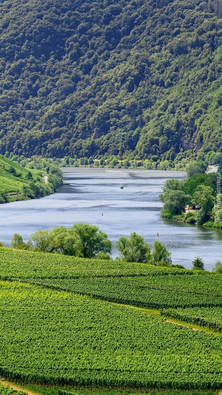 Winnice nad rzeką Mozelą w Niemczech