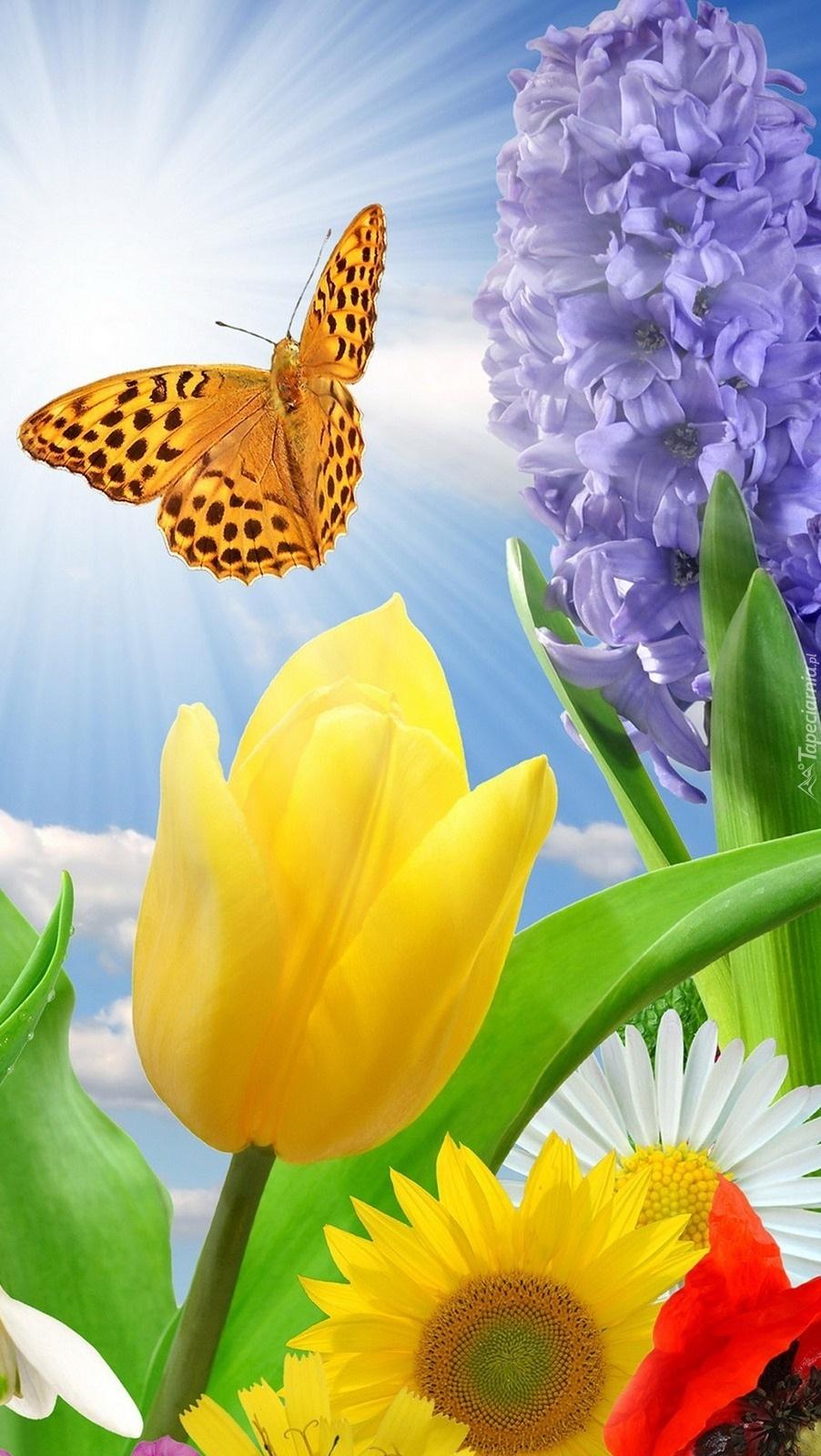 Wiosenna grafika z kwiatami i motylem