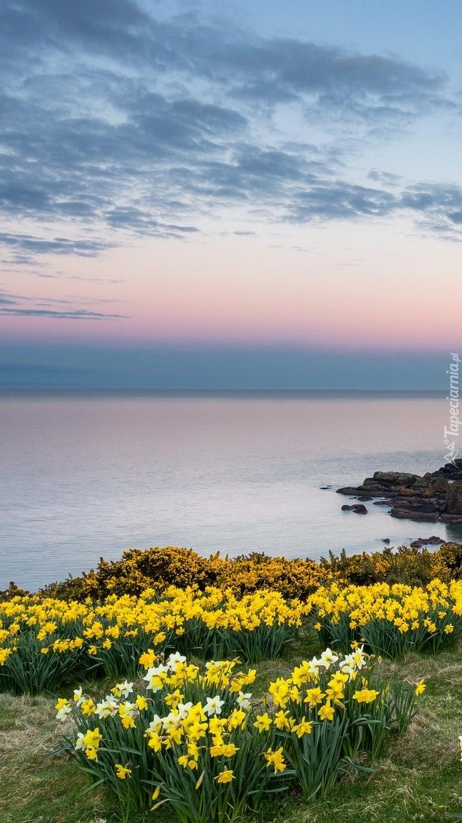 Wiosenne kwiaty na wybrzeżu
