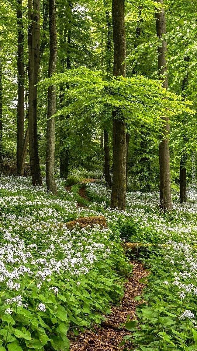 Wiosenne kwiaty w lesie