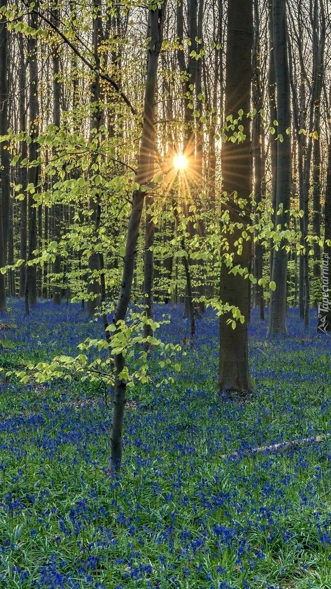 Wiosenny las w promieniach słońca