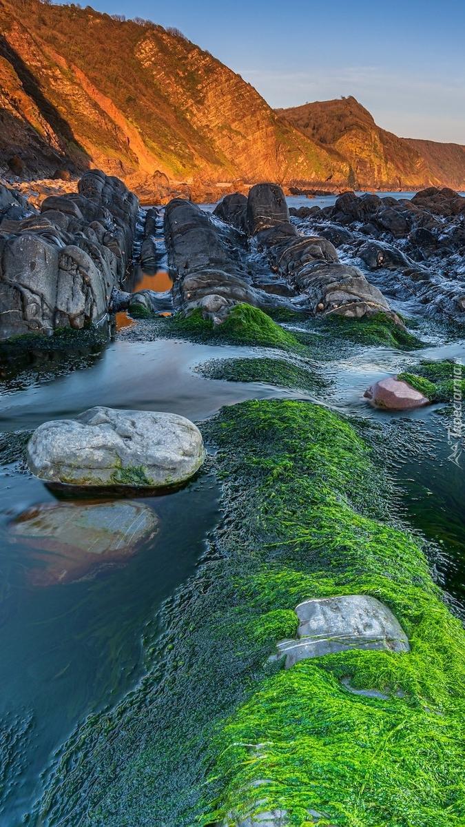 Wodorosty i skały na plaży Mouthmill Beach